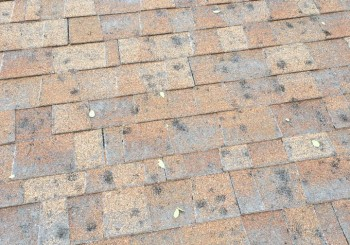 Roof need Repair?